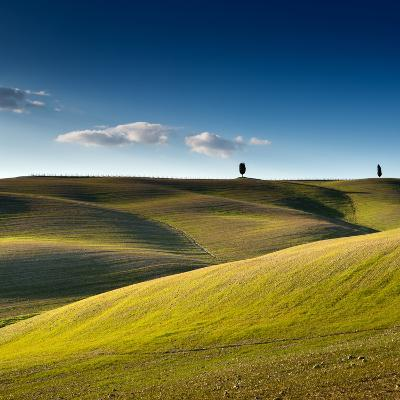 Cypress Trees on Top of Rolling Field and Blue Sky-Michele Berti-Photographic Print
