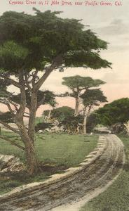 Cypress Trees, Pacific Grove, California