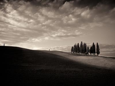 Cypress Wood-Marco Carmassi-Photographic Print