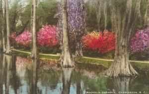 Cypresses in Magnolia Gardens, Charleston, South Carolina
