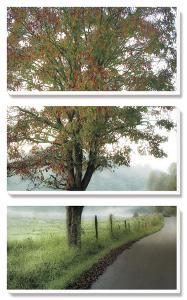 Almost Autumn by D^ Burt