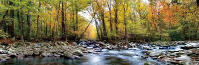 Porters Creek by D^ Burt