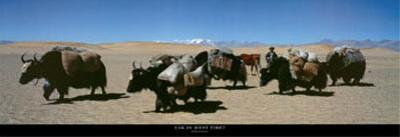 Yak in West Tibet