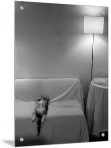 Cat Sleeping on Back by D.J.
