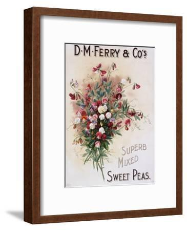 D.M. Ferry and Co's Superb Mixed Sweet Peas Poster