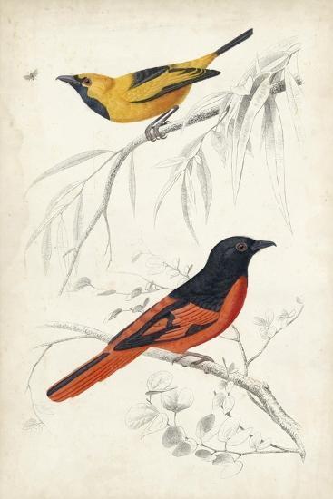 D'Orbigny Birds VIII-M^ Charles D'Orbigny-Art Print