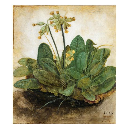 D?Rer: Tuft Of Cowslips-Albrecht D?rer-Premium Giclee Print