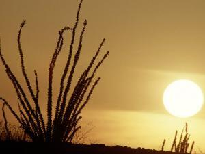 Desert Sunset with Ocotillo, CA by D^ Robert Franz