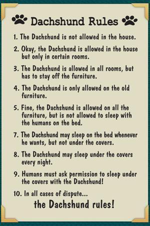 Dachshund House Rules