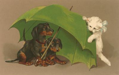 Dachshund Puppies Under Umbrella with Kitten