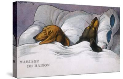 Dachshunds in Bed a Marriage of Convenience