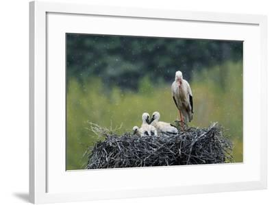 Dady...-Nicolás Merino-Framed Photographic Print