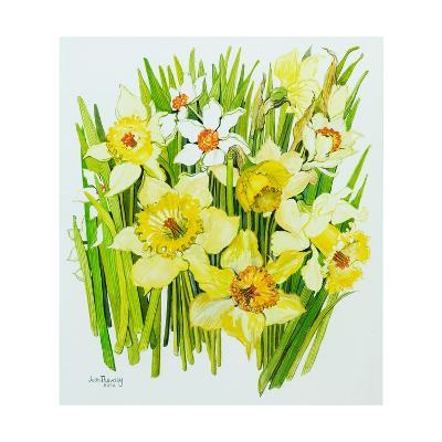 Daffodils and Narcissus-Joan Thewsey-Giclee Print