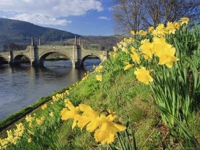 Daffodils by the River Tay and Wade's Bridge, Aberfeldy, Perthshire, Scotland, UK, Europe-Kathy Collins-Photographic Print