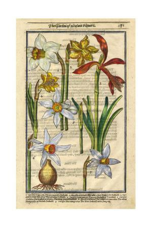 Daffodils with Other Flowers and Bulbs