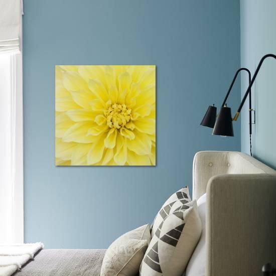 Dahlia Flower Photographic Print Kaj Svensson Art Com