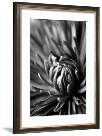 Dahlia II-Beth Wold-Framed Photographic Print