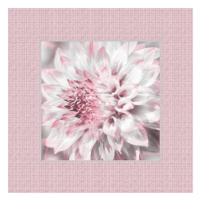 Dahlia Pinks 5-Suzanne Foschino-Art Print