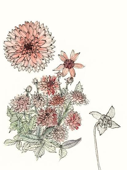 Dahlia Study-Melissa Wang-Art Print