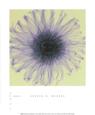 Dahlia-Steven N^ Meyers-Art Print
