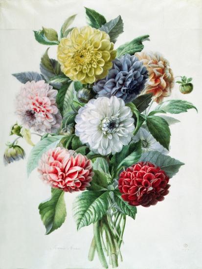 Dahlia- Marie-Anne-Giclee Print