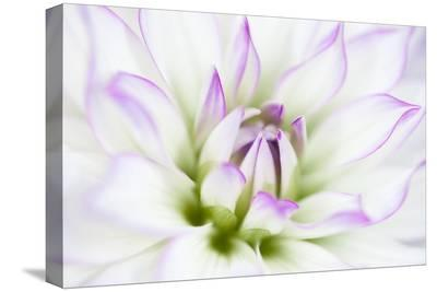 Dahlia-Dawn LeBlanc-Stretched Canvas Print