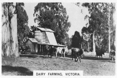 Dairy Farming, Victoria, Australia, 1928--Giclee Print