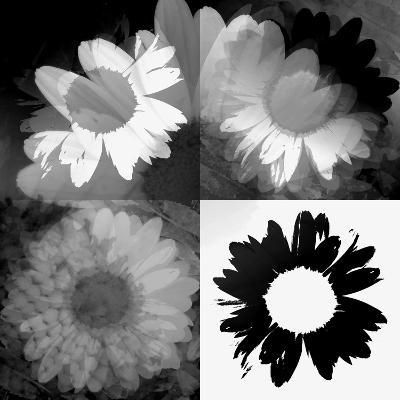 Daisies In Black And White II-Ruth Palmer-Art Print