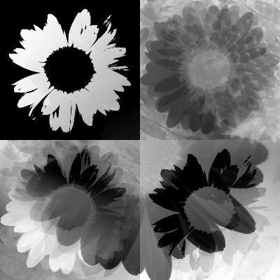 Daisies In Black And White-Ruth Palmer-Art Print