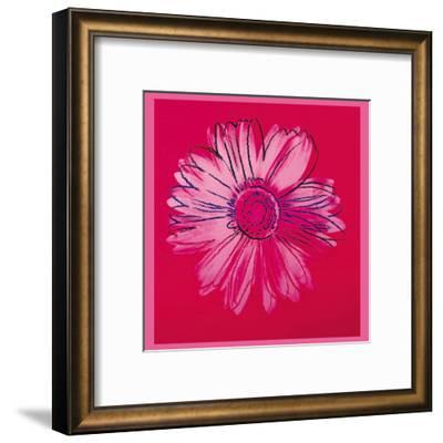 Daisy, c.1982 (Crimson and Pink)-Andy Warhol-Framed Art Print