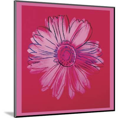 Daisy, c.1982  (crimson and pink)-Andy Warhol-Mounted Print