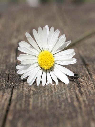 Daisy Flower On The Floor-Wonderful Dream-Art Print