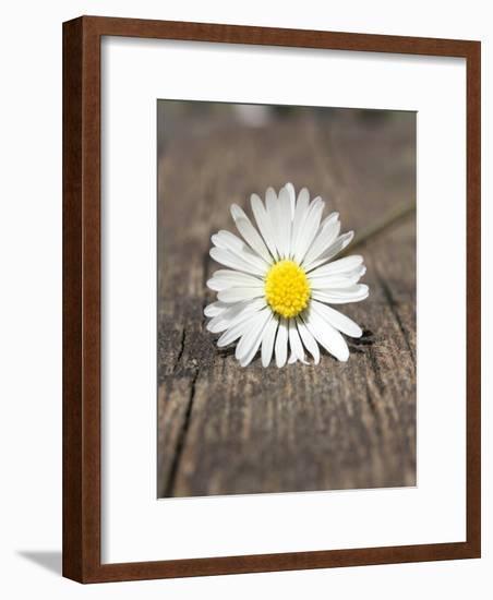 Daisy Flower On The Floor-Wonderful Dream-Framed Art Print