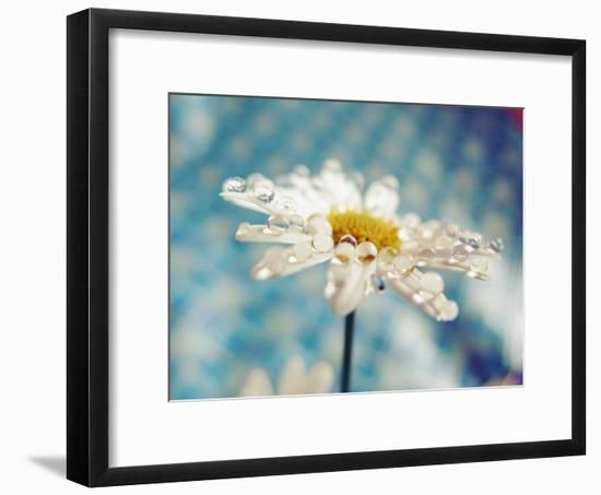 Daisy Flower with Water Droplets on Petals-Carolina Hernández-Framed Photographic Print
