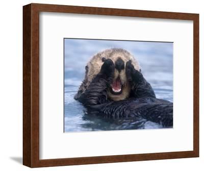 Sea Otters, Alaska, USA