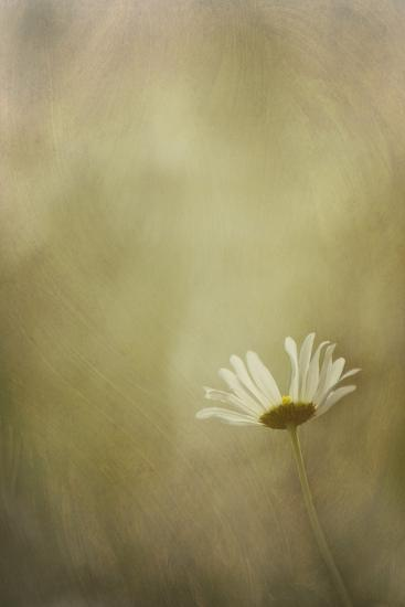Daisy in the Light-Kathleen Clemons-Photographic Print