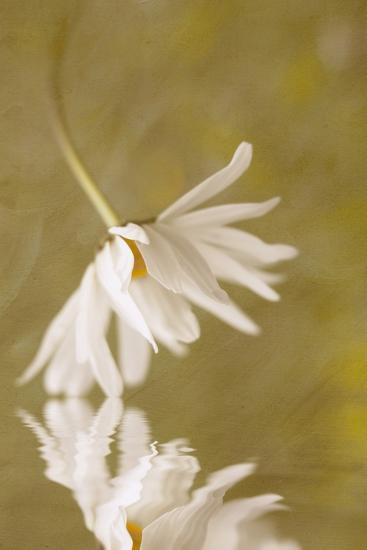Daisy Reflection-Kathleen Clemons-Photographic Print