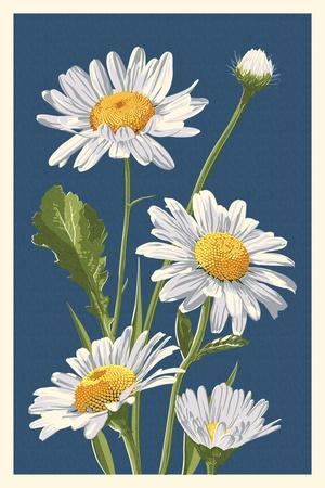 https://imgc.artprintimages.com/img/print/daisy_u-l-q1gq92g0.jpg?p=0