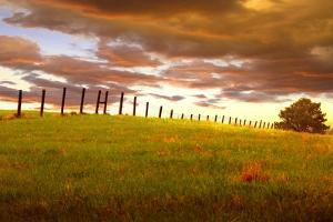 Fenceline, South Dakota by Dale O?Dell