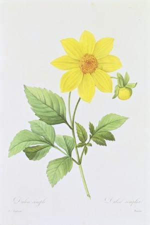 https://imgc.artprintimages.com/img/print/dalea-simplex-engraved-by-bessin-from-choix-des-plus-belles-fleurs-1827-33_u-l-pldg7f0.jpg?p=0