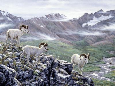Dall Sheep at Denali-Jeff Tift-Giclee Print