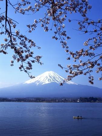 Cherry Blossom with Mount Fuji and Lake Kawaguchi in Background, Fuji-Hakone-Izu National Park, Jap