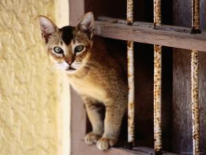 Cat Climbing Through Window by Dallas Stribley