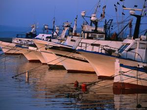 Fishing Boats in Porto Calasetta, Sant' Antioco, Sardinia, Italy by Dallas Stribley