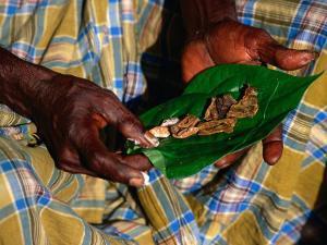 Indigenous Veddah or Wanniyala-Aetto Man Holding Betel Nuts, Colombo, Sri Lanka by Dallas Stribley