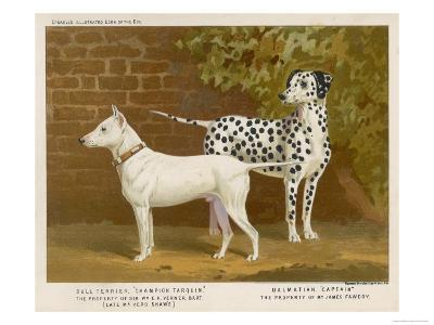 Dalmatian and a Bull Terrier Stand Side by Side Gazing at Something in the Distance--Giclee Print
