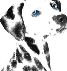 Dalmatian Date V