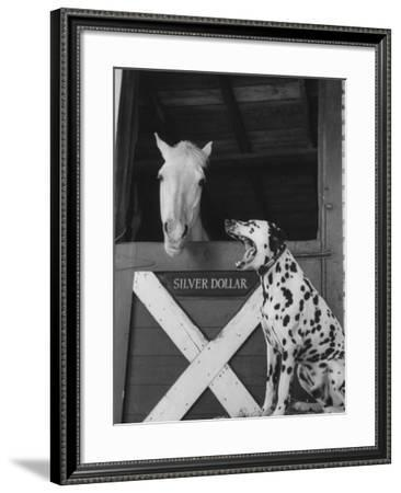Dalmatian Stable Dog at Mystery Stables--Framed Photographic Print
