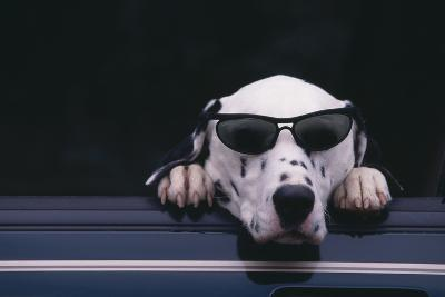 Dalmatian Wearing Sunglasses-DLILLC-Photographic Print