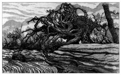 Dam and Stump-Jack Beal-Limited Edition